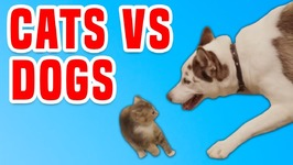 Cats Vs Dogs - Funny Animals Compilation