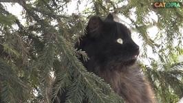 Feline Winter Wonderland
