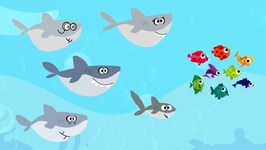 Baby Shark Song   Animal Song For Kids