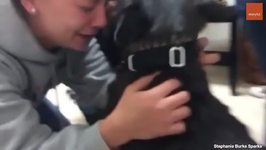 The Amazing Moments When Dogs are Reunited With Their Humans