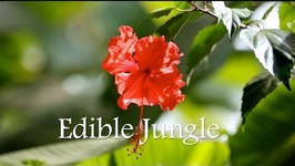Edible Jungle, Chocolate Farm - Panama