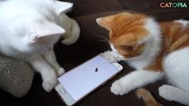 iPad the cat Episode 2