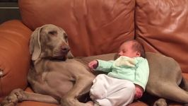 Cute Dog and Tiny Baby Share a Special Bond