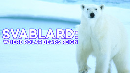 Svalbard: Where Polar Bears Reign