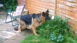 Puppy Investigates Garden Intruder
