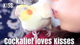 Cockatiel Loves Kisses - His Morning Routine