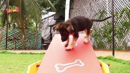 Dogs Funny Jump Fails