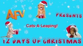 Funniest Cat Leaps - 12 Days of Christmas