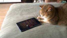iPad the cat Episode 3