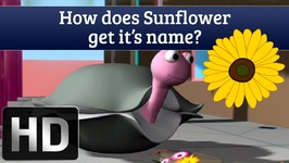 How Does Sunflower Get Its Name - Interesting Facts About Sunflower