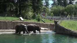 Take a Swim with the Oregon Zoo's Elephants