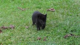 Baby Jaguar Takes on the Mighty Black Bin Liner