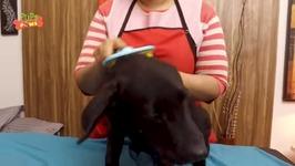 Dog Getting A Head Spa
