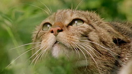 S01 E02 - Land of the Wild Otter - Wild Islands