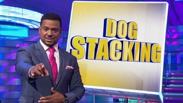 Assignment America - Dog Stacking