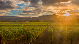 Flavors of Napa Valley, California