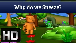 Why Do We Sneeze - Interesting Facts About Human Body
