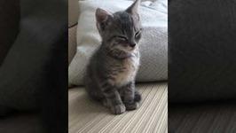 Adorable Kitten Struggles to Stay Awake