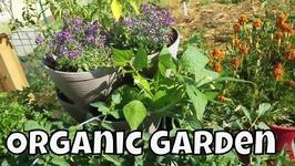 Garden Vlog And Tour