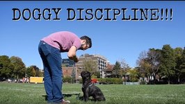 Dad Gives Puppy Obedience Lessons in Park