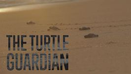 Eaten And Trafficked: Saving Turtles From Tradition