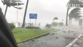 Typhoon Hato Downs Trees and Blows Debris in Guangdong, China