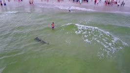 Fisherman Reels in Hammerhead Shark off Panama City Beach