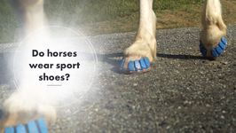 Will This Invention Ease The Suffering Of Horses