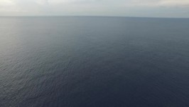 Drone Footage Capture Bryde's Whale Feeding in Curacao