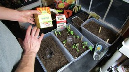 How To Water And Fertilizer Your Vegetable Transplants- Water Soluble Feeding And Acclimation