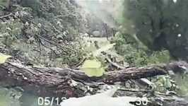 Trees Crash Across West Virginia Road, Narrowly Missing Driver