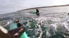 These Surfers Have a Whale of a Time