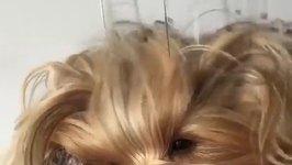 Pampered Pooch Enjoys Head Massage