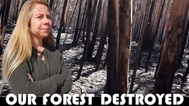 OUR FOREST IS DESTROYED BY PORTUGAL'S FOREST FIRES - FAMILY DAILY VLOG