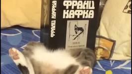 Meet 'Science Cat'