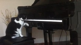 Piano Cat Loves Player Piano - Viral Videos