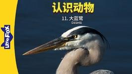 Meet the Animals 11 - Great Blue Heron (认识动物 11大蓝鹭) - Level 2 - Chinese