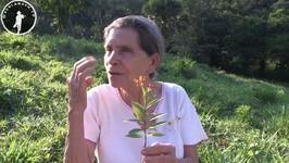 Guatemalan Medicine Women - Medicinal Plants Pt 5