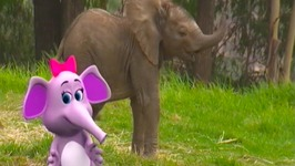 Baby Elephants Song - Learn Animals Songs