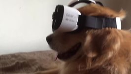 Dog Enters New World With Virtual Reality