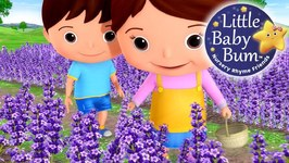Little Baby Bum - Lavender's Blue Dilly Dilly - Nursery Rhymes for Babies - Songs for Kids