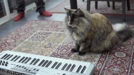 Cats Try to Play Laser Piano