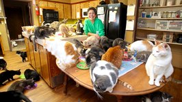 Ultimate Cat Lady - Woman Shares Her Home With 1,100 Felines