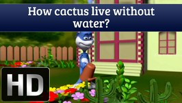Tell Me How - How Can Cactus Live Without Water