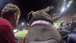 GoPro Captures Dog's Mischievous Journey Around Providence Park