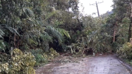 Tropical Storm Kai-Tak Downs Trees and Blocks Roads in Philippines
