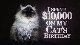 I Spent 10,000 On My Cat's Birthday (Official Video)