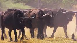 S02 E05 - Botswana - Ultimate Journeys