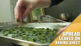 How To Make Yaupon Tea At Home