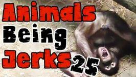 Thug Life - Animals Being Jerks - 25